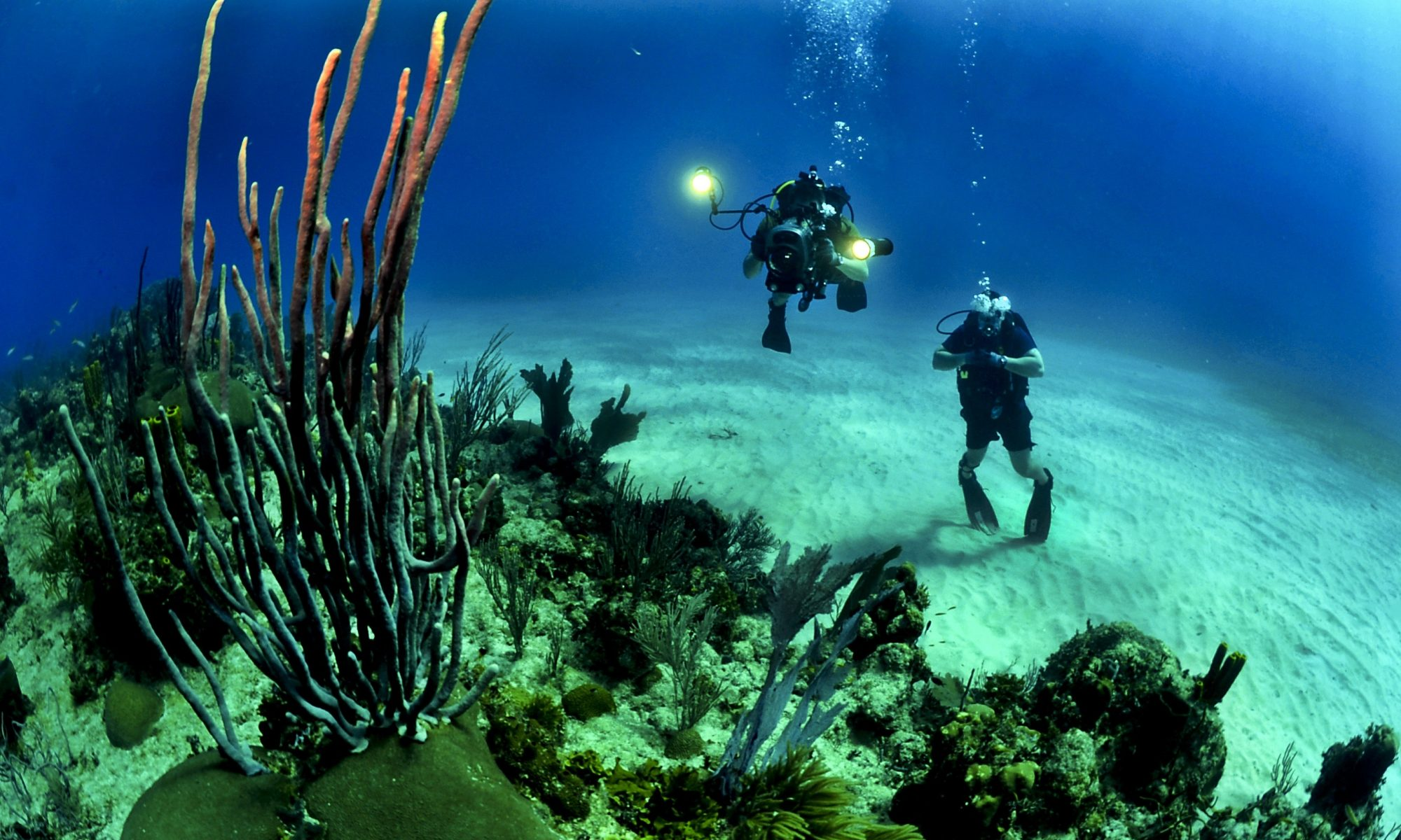 Best Scuba Diving Tours & Locations